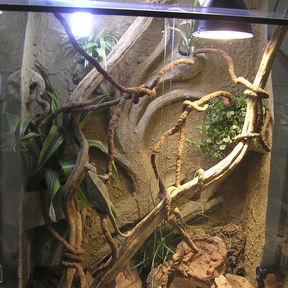 U Chameleona Terárium pro Cham...